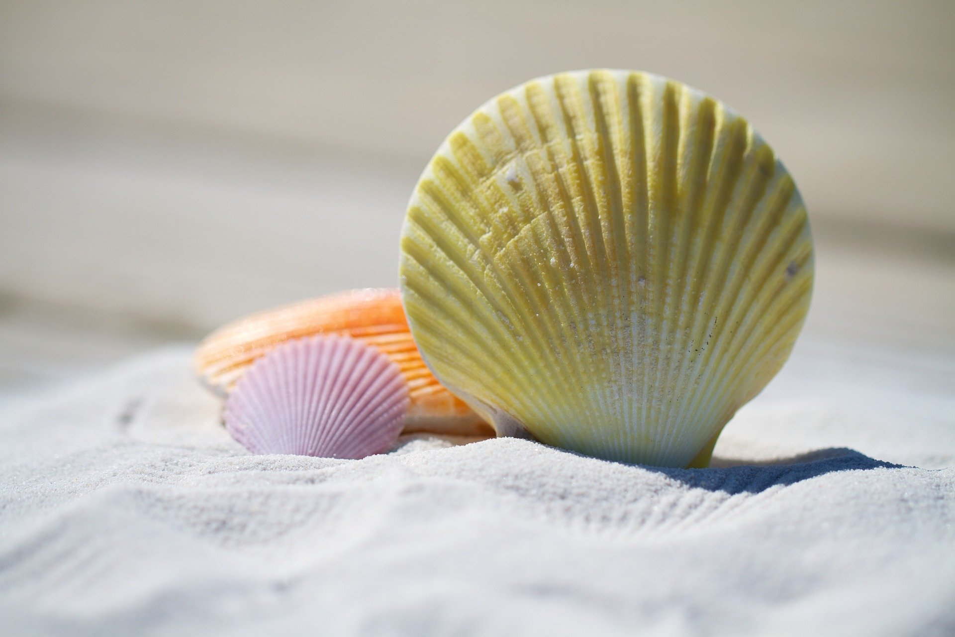 Your own true nature shells